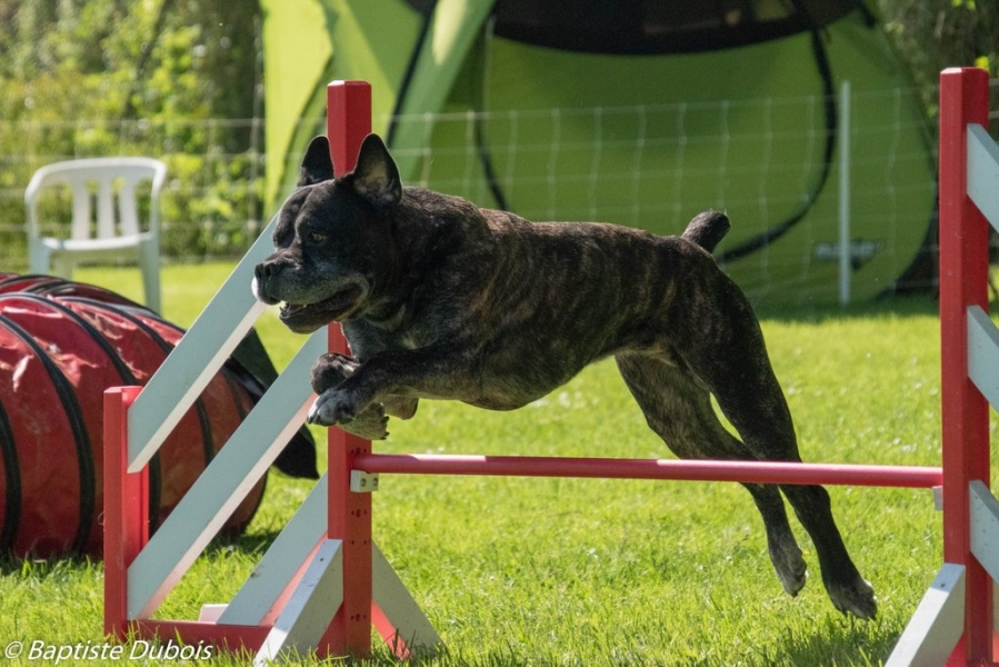 concours-agility